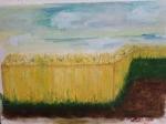 Champ de blé 30/40 cm